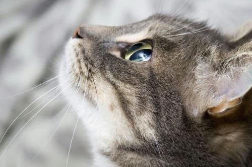 撸猫时惹猫生气了怎么办��4招教你平复猫主子的心��