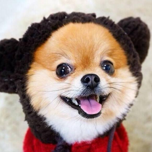 女生養狗,可以選這六種狗狗,不僅漂亮、還聰明
