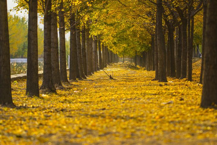 秋意渐浓,那些关于秋天的诗意美文(原来秋天这么美)