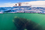谁知道海水是哪来的£¿面积最大的未解之谜£¡