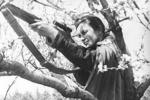 苏联女死神猎杀德军309人,近半成绩是用此枪取得