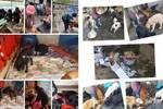 从崇州屠狗场救出的141只狗狗��后续情况来了����