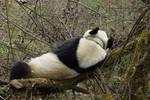 世界睡眠日��动物睡姿千奇百态 ��睡艺��精湛