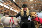 美国小猪和狗狗成?#38376;?#21451; 跨界友谊令人感动