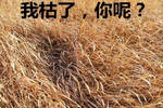 ¡°Cry up¡±&#30340;&#24847;&#24605;&#21487;&#19981;&#26159;¡°&#22823;&#21741;?#20445;?#30495;&#23454;&#30340;&#24847;&#24605;&#21487;&#24046;?#29420;²£?></a></div><h4><a href=