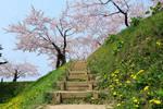 日本和美国签署不平等条约后造了个怪城堡��现在以樱花著称