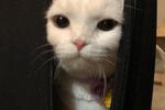 小胖猫吃饱喝足后,靠着墙,开始了思考猫生的时刻了
