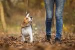 遛狗的时候,我们需要注意什么?这六条提示可以帮你�;す饭�