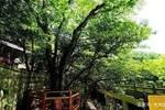 """中国唯一登上太空的树,也是目前仅存的一棵,被称为""""地球独子"""""""