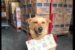 为避免生病的狗被喂食,主人在它胸前挂牌,结果有人回复了两个字