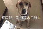 ����:最新��力式神大岳丸,其��他的真��身份是一只舔狗!