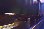 《國寶檔案》到信陽博物館拍攝的六件國寶 有何來歷
