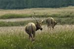 鄱陽湖發現四不像:頭像馬角像鹿尾像驢,古人希望食其肉長生不老