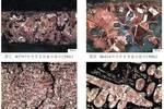 襄陽余崗墓地出土青銅容器的金相及成分分析