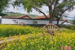 甘肅學子暑期手繪千米文化墻 扮靚新農村