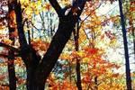 王維寫秋天最精美的唐詩,字字詩情畫意,毫無悲秋之感