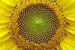 【數學動圖】數學,原來可以這么美!