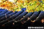 54岁苏轼经过扬州,写下一首宋词,字字都是人生漂泊
