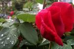 秋思:一場秋雨,沉重了一個秋天的想望