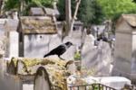 在古代,烏鴉不管在中國還是國外都是神圣的
