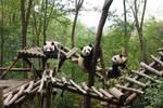 發熊貓啦:《動物園之星》,體驗真實的動物園經營