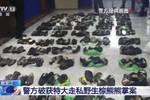 黑龍江警方查獲214只走私熊掌 殘忍手段讓民警震驚