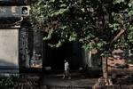 浙江蘭溪:諸葛八卦村的千年傳奇