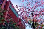 重磅!華南理工公布2020藝考專業和報考安排計劃