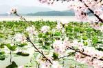 三月的烟雨,飘摇的江南,我想带你去杭州