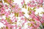 愿你目光所及之处,处处皆是花开!