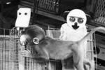 """孩子小时奶奶带还是妈妈带好?60年前""""恒河猴实验""""说出一个真相"""