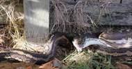农村男子找猫,在后院看到这一场景,接下来的行为让人破口大骂!