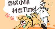 主人领养一只豹子,让狗狗陪它玩耍,没想这一陪就搞笑了