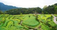 实拍中国最美乡村的春天,婺源万亩油菜花盛放,云海梯田天上人间
