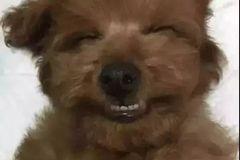 泰迪对各种狗狗表情包表示不屑,跟谁还不会点绝技似的.图片