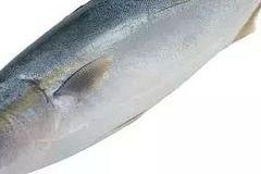 鱼类保健,不可小觑