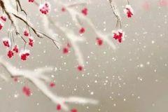 """小雪节气过后,要记得""""生吃萝卜、熟吃梨""""!"""