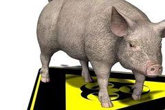 非洲猪瘟哪来的?肉还能吃吗?会传染人吗?答案都在这里!