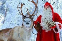 现在去买圣诞树,还来得及吗?