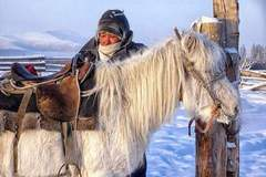 世界上最耐寒的马,身高不足150厘米,在零下60度的环境中生存