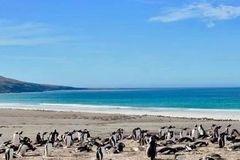 南极之旅(二)西点岛和桑德岛