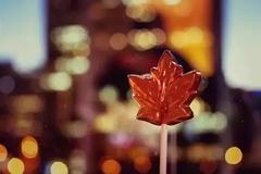 留学VS不留学有啥不一样?留学加拿大过来人说了些实在话
