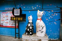 厦门网红猫街,街上看不到猫,博物馆撸猫要收费,游客说:骗人