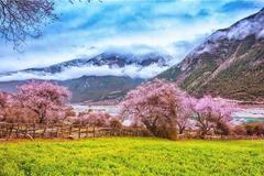 爱在西藏之春 | 2019让诗与远方幸福相遇