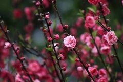 美到令人窒息!南宁百亩桃花盛开啦,漫山遍野,约吗?