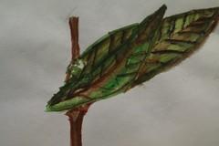 绘画:枝上叶