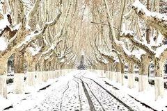 高校唯美雪景图来了,哪一幅最让你心动? | 微言夜读