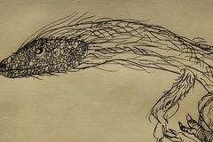 绘画:原始中华龙鸟