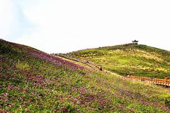贵州最高峰韭菜坪,海拔高达2900.6米,沿途的风景之美丽!