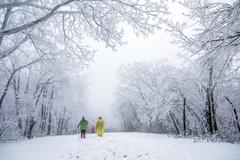 """杭州藏着一个""""雪国"""",每年只有在春冬出现,景色不比东北雪乡差"""